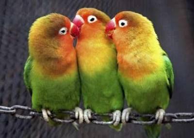 Pets: parrots.