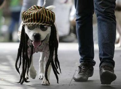 Pet:Rastafarian dog.