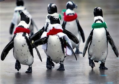 animals: Jackass Penguins.