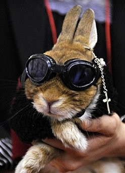 Owners display their rabbit in fancy dress and dark goggles during a rabbit fashion contest at the Rabbit Festa in Yokohama city in Kanagawa prefecture, suburban Tokyo.