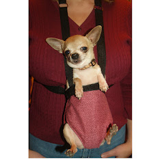 Pocket Pet Carrier Front Back Pack Sling