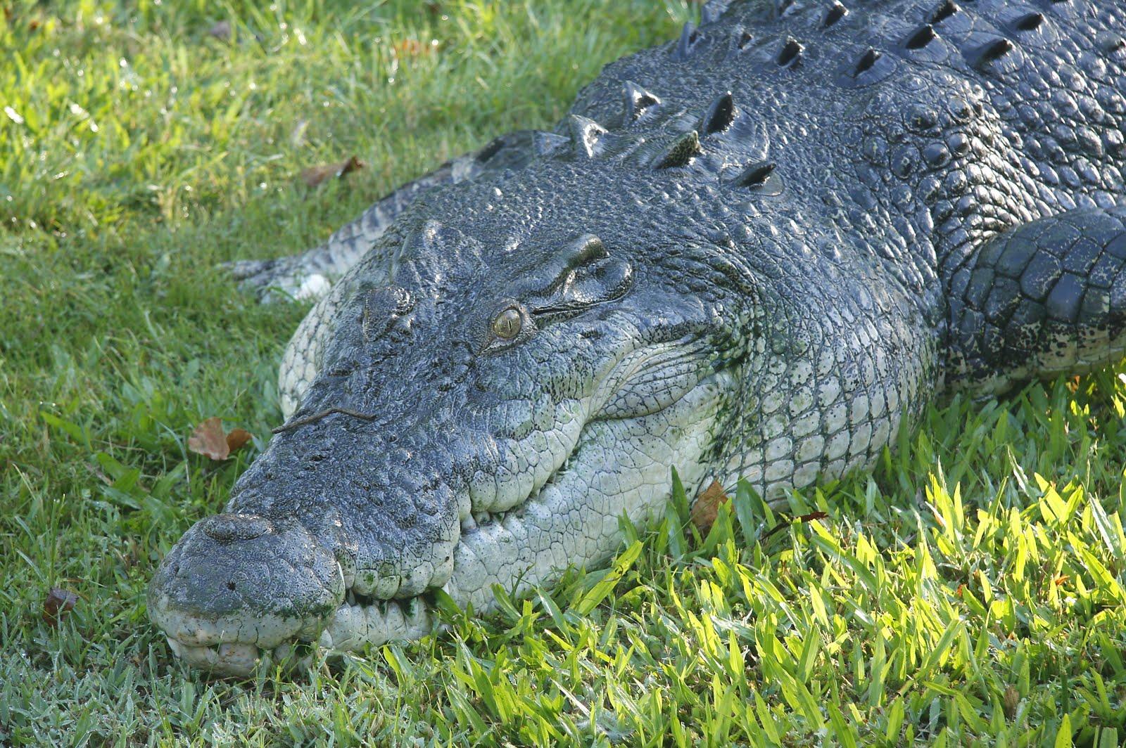 [Croc.jpg]