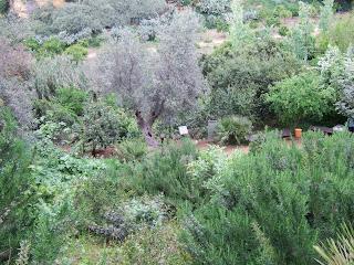 Bild 8 Garten von Kolymbetra