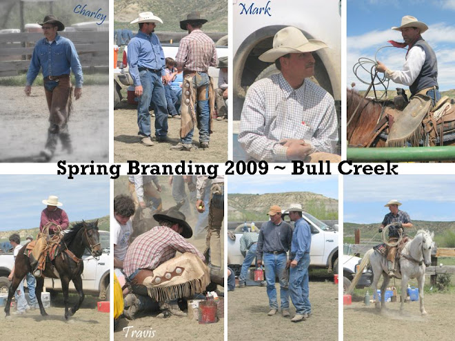 Bull Creek Branding