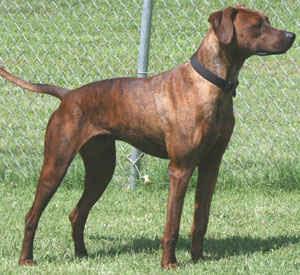 Dog Dna Test Canada