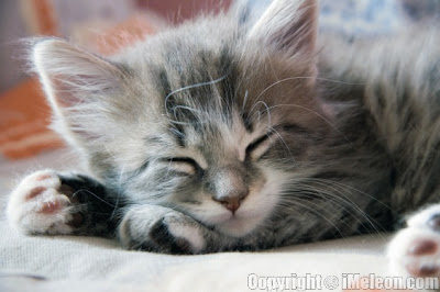 http://1.bp.blogspot.com/_FSKC2Yphz1Y/TVCYrQErmWI/AAAAAAAAAIk/NaeFsE_2S18/s1600/sleeping_kitten.jpg