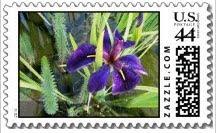 purple water iris postage stamps