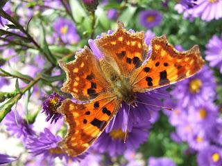 La biodiversité de mon jardin ou comment préserver et accueillir ...