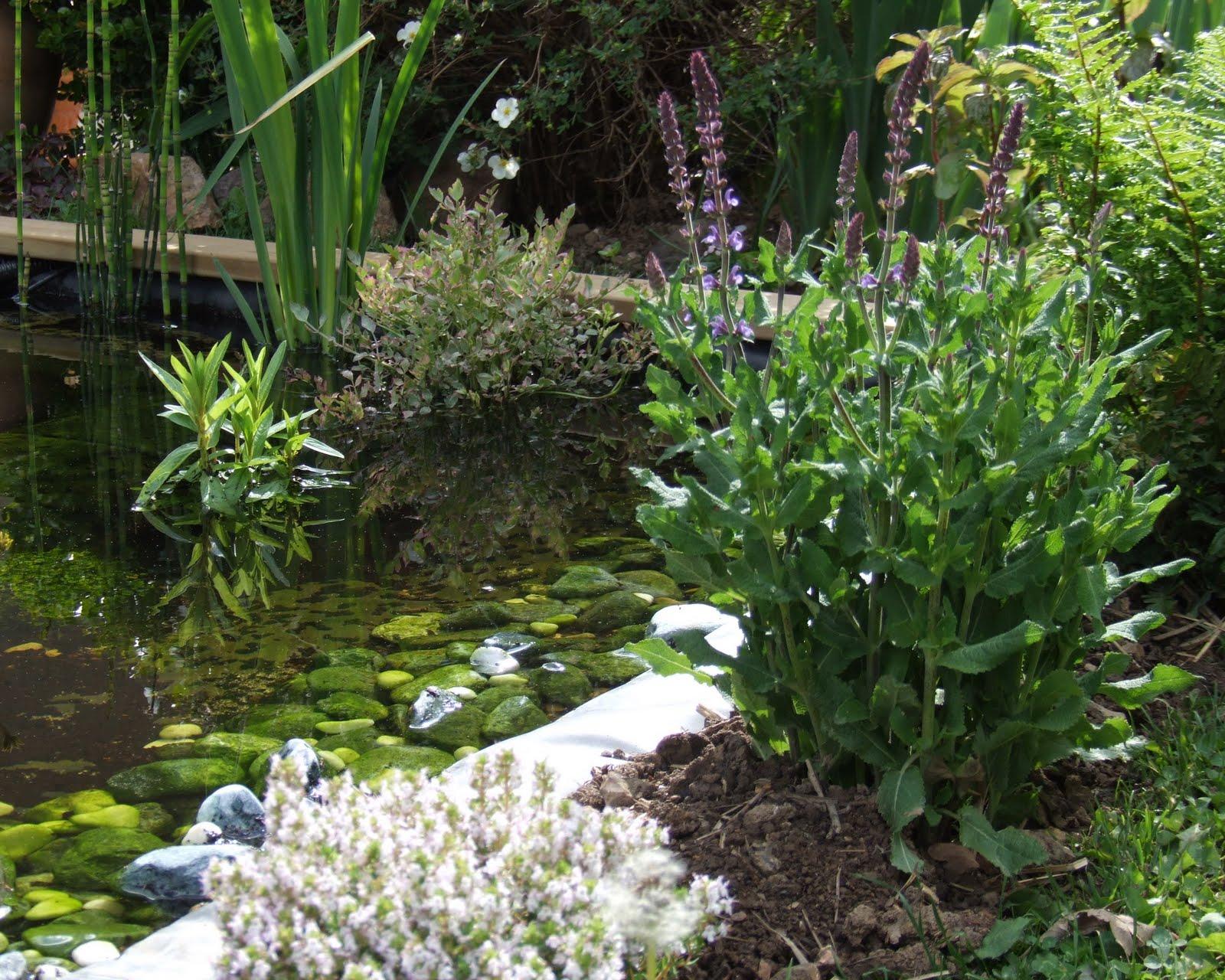 La biodiversit de mon jardin ou comment pr server et accueillir la biodiversit au jardin un for Amenager son jardin en normandie