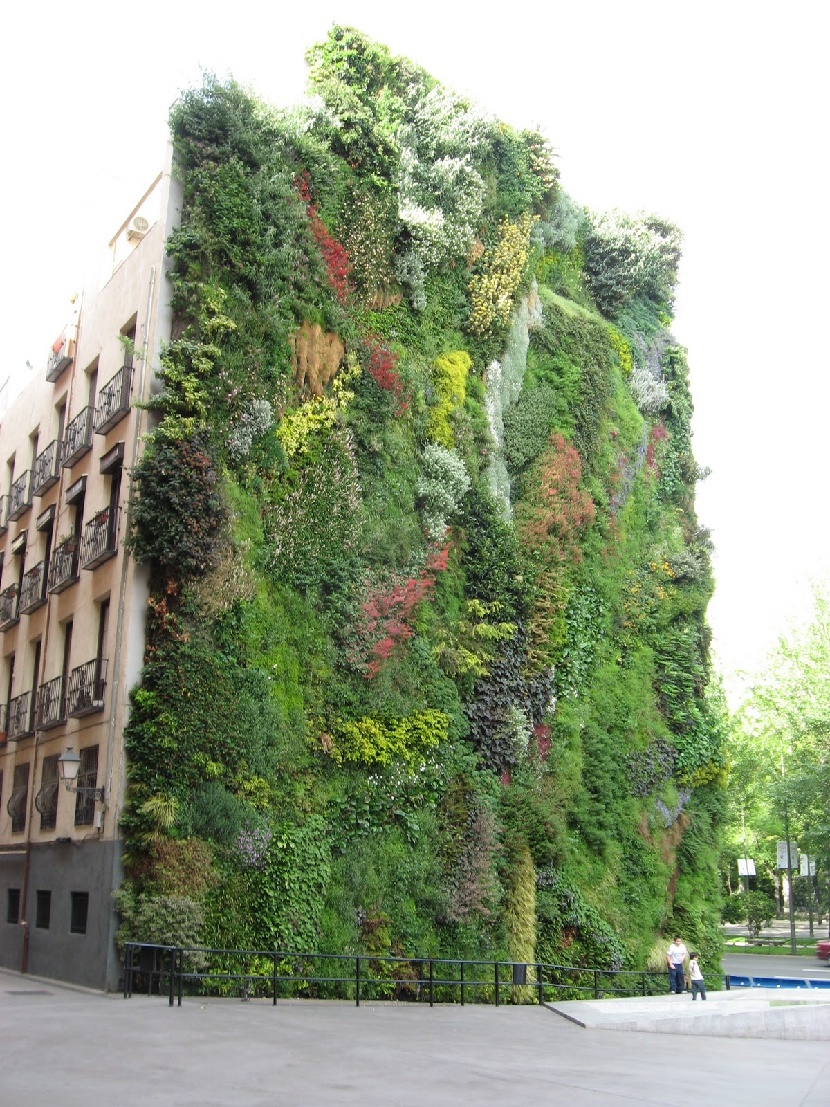 Arnold 39 s outbursts green walls for Vertical green wall