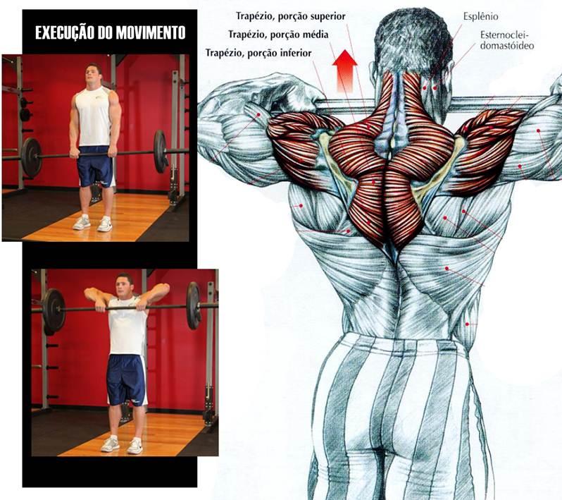 Conhecido Blog Corpo Perfeito: Os Melhores Exercícios para Ombros KX59