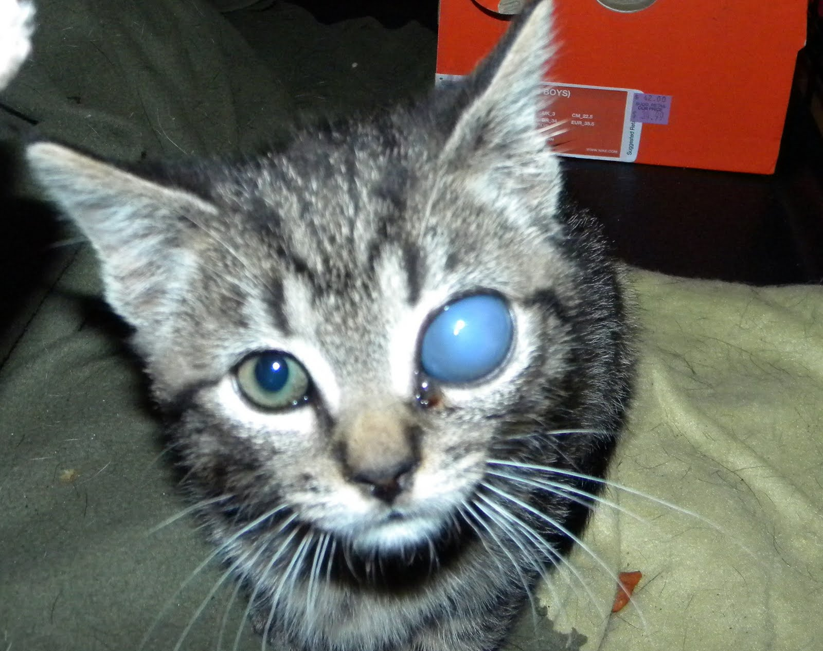 Dark Grey Kitten With Blue Eyes | www.pixshark.com ...