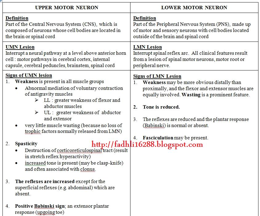 Upper Motor Neuron Vs Lower Motor Neuron Medik Ukm