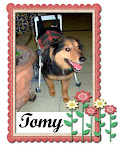 TOMMY EN SU GRAN HOGAR