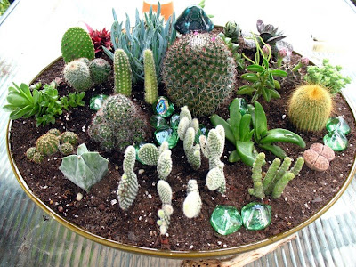 Watch more like Indoor Cactus Garden Ideas