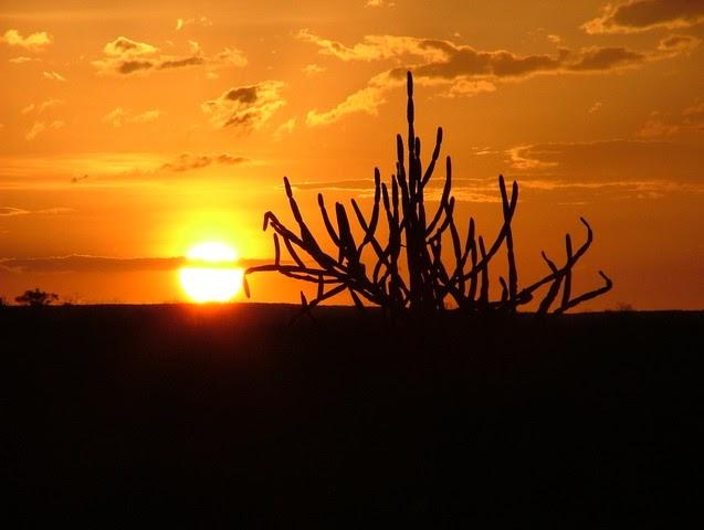 Prof. Torres Geo: Vidas Secas e a paisagem do sertão