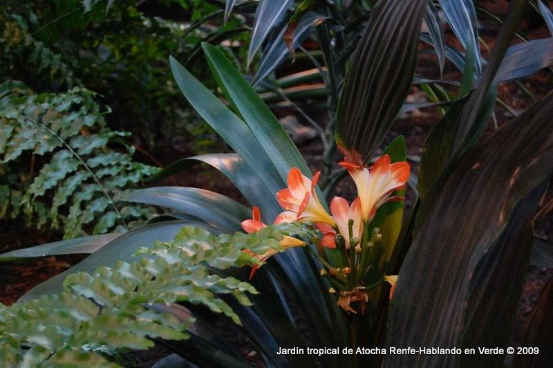 Hablando en verde jard n tropical de atocha - Jardin tropical atocha ...