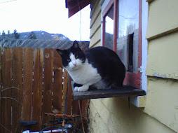 Cat House Veranda