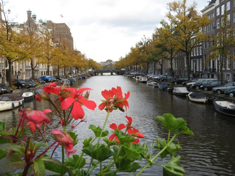 canal florido