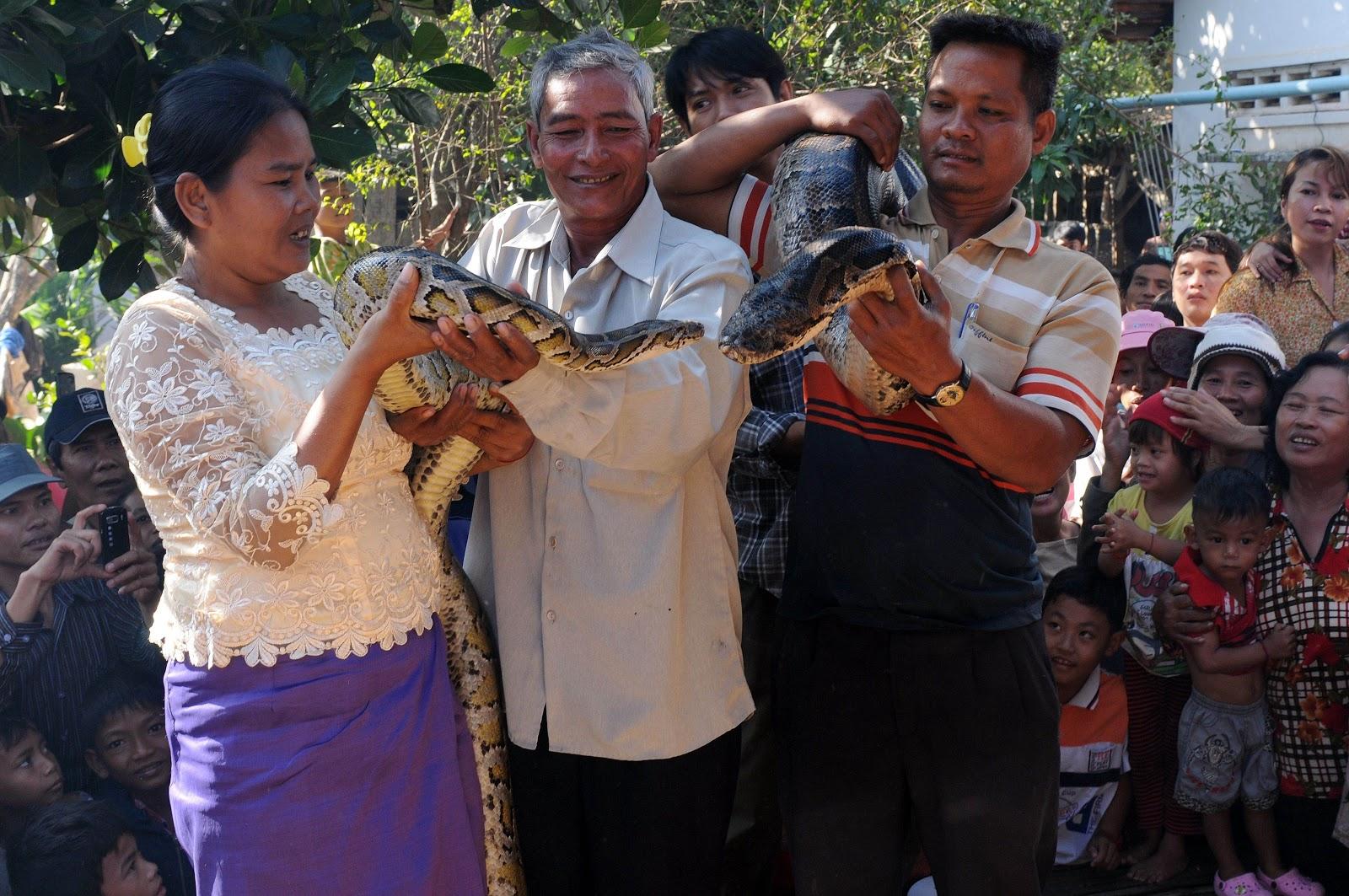 Python newlyweds draw crowds