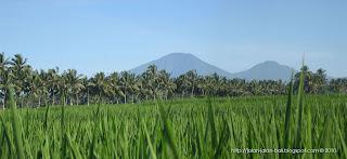 tanaman padi,subak