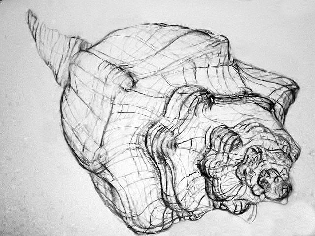 Contour Line Drawing Shell : Beau hestekin