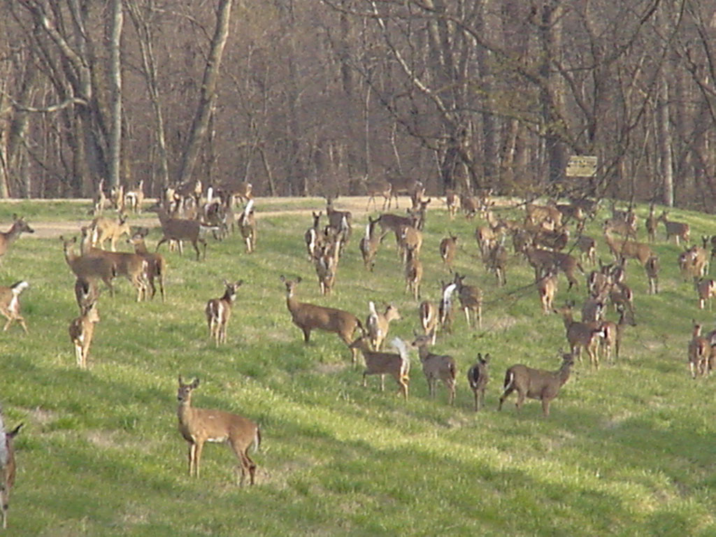Deer Dogs For Sale In Va