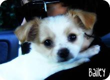my boy , bailey