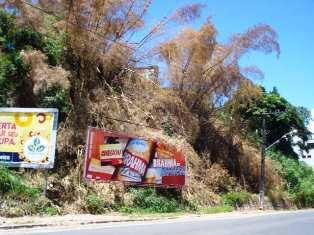 reflorestamento de encostas em ilheus é um tema do forum ambiental do sul da bahia