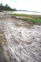 Impactos Ambientais em Ilhéus são Negligenciados