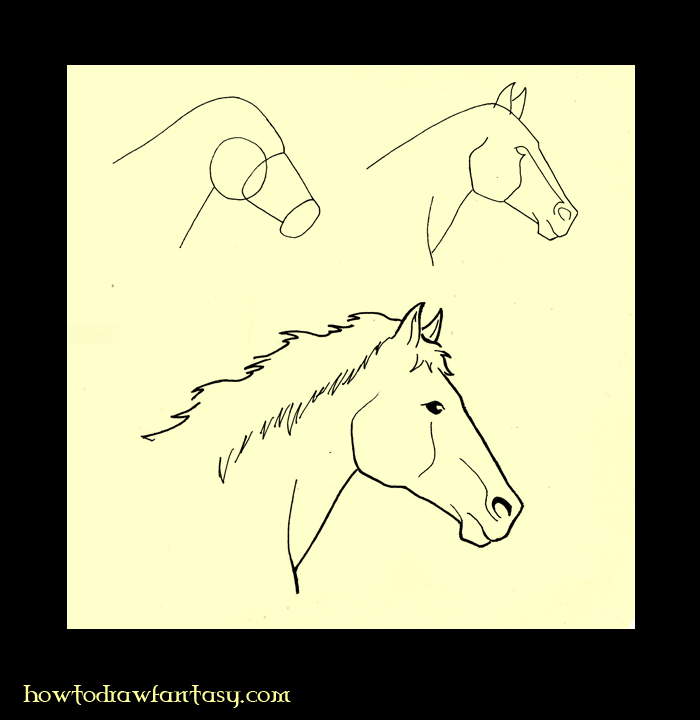 horse face profile. How to draw a horse head