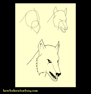 Learn how to draw a wolf head