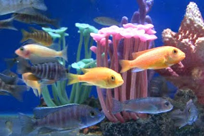 Tropical fish species guide for Jans tropical fish