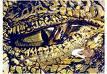 Lágrima de crocodilo / Google