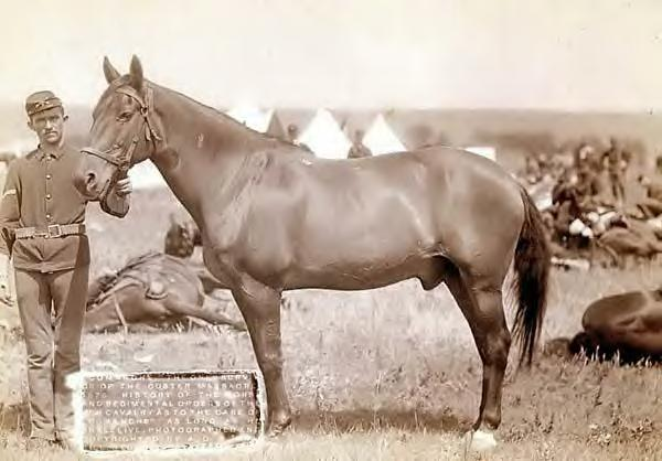 Camanche, 1887, only survivor of Custer's Last Stand