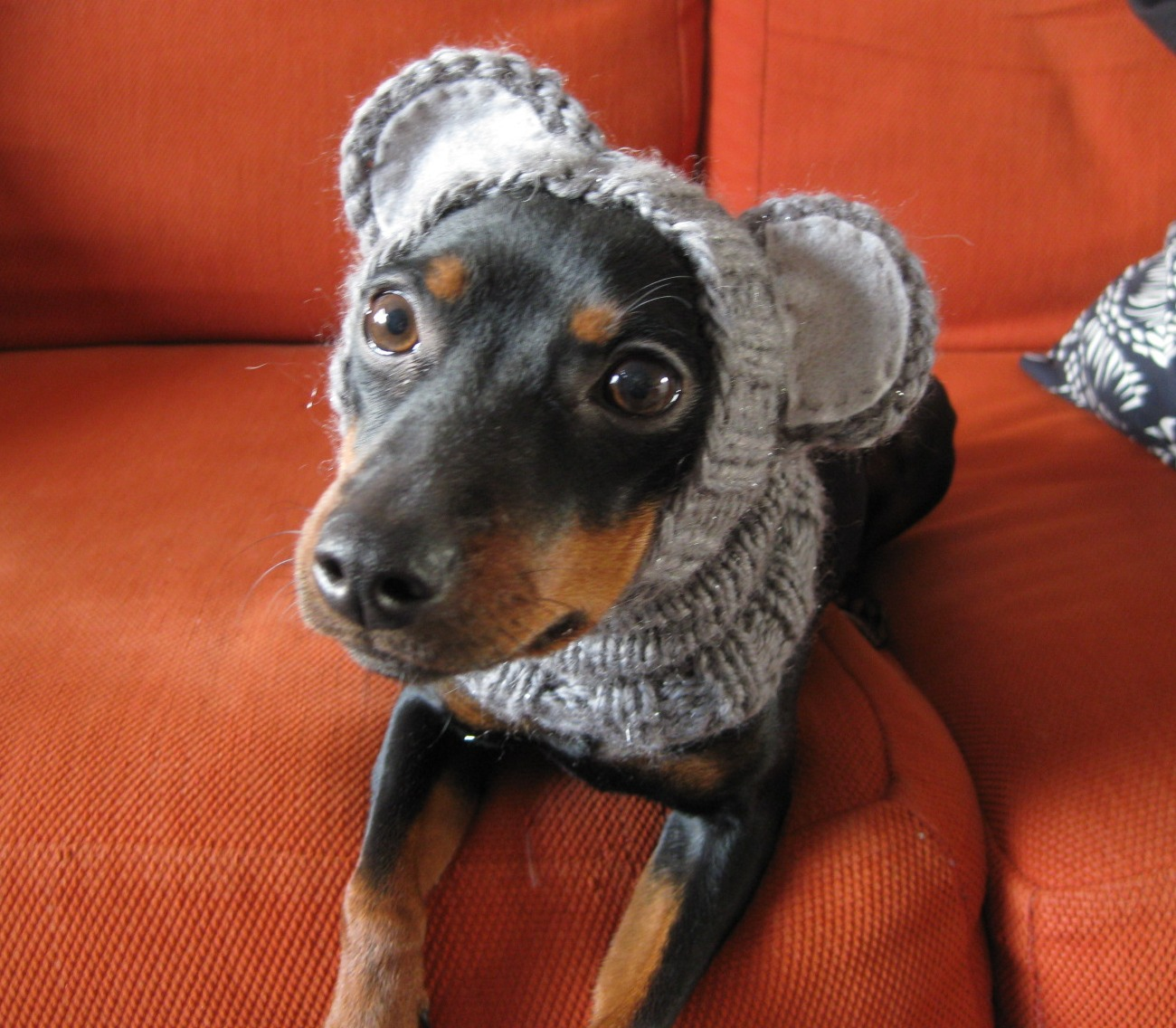 Knitting Patterns For A Dog : Its About Amoena : Dog Food Week Giveaway!