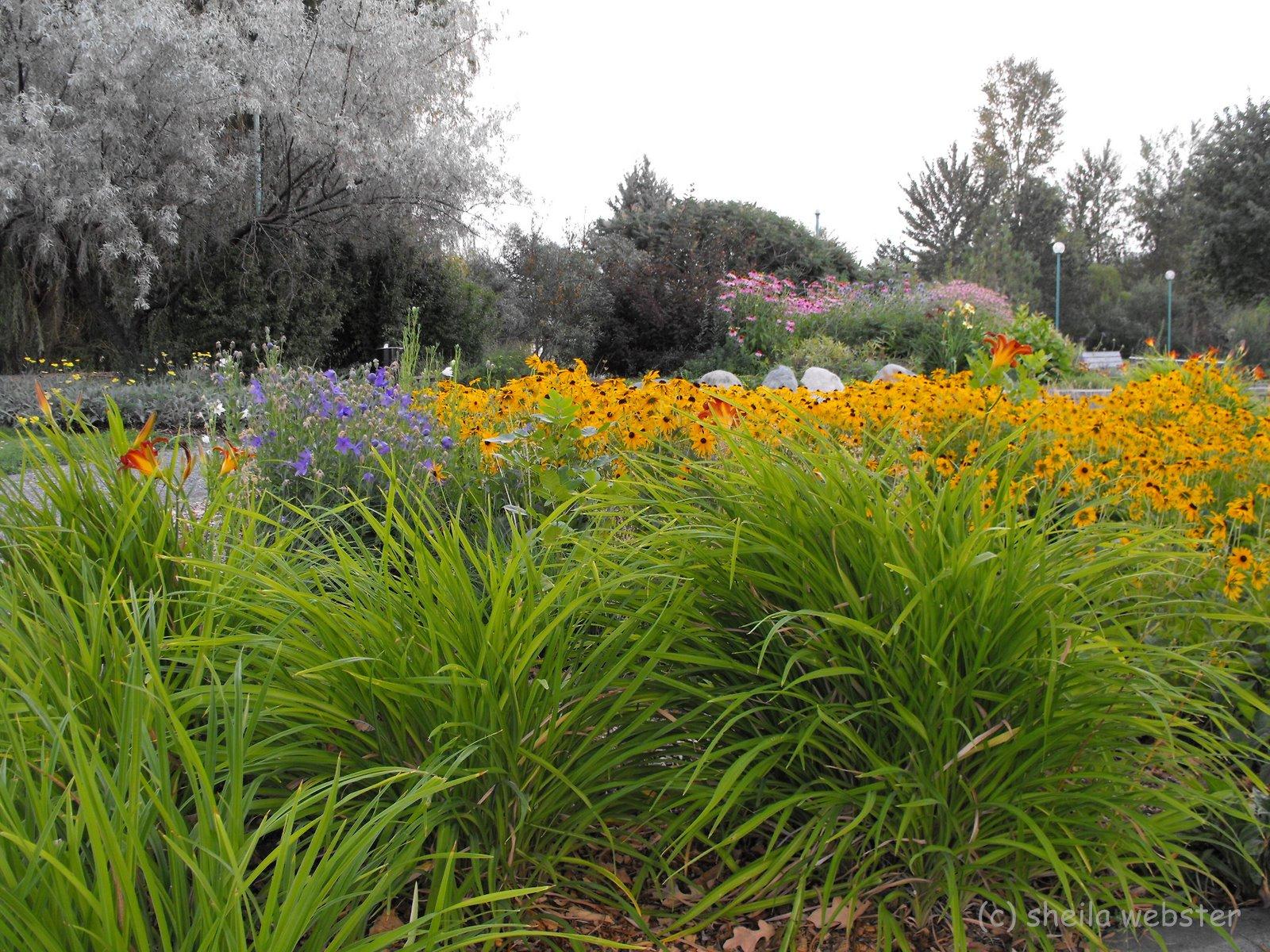 we-love-kamloops: Xeriscape ~ Desert ~ Cactus ~ Gardening