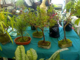 some cool bonsai plants