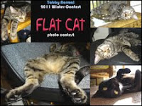 Flat Cat Contest