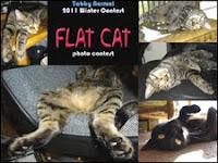 Flat Cat Contest