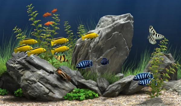 fish. Fish Aquarium