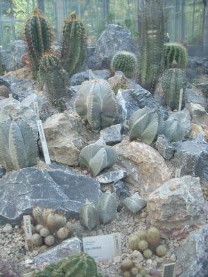 Cactus e piante grasse ottobre 2009 for Serra piante grasse