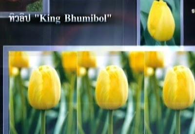 [tulip.jpg]