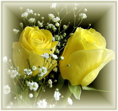 Pair Of Yellow Rose image