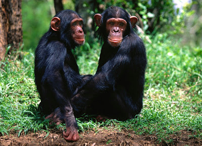 Double Monkey or Chimpance stills