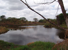 Laguna embellece paisaje unellista