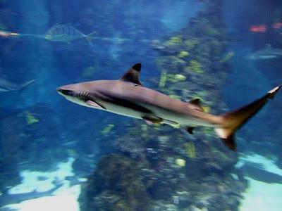 L' Aquarium