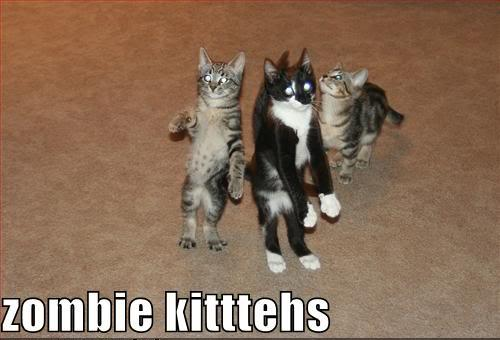 http://1.bp.blogspot.com/_FqQEHPUq6Zc/TQjlKNCmlOI/AAAAAAAAO9w/2Eg922mPoK0/s1600/Funny-Pictures-of-Cats-With-Captions-zombie-kittehs-invasion.jpg