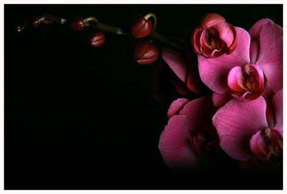 красивые фото орхидей