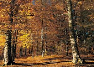 Los bosques son el hábitat de numerosas especies